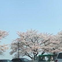 見納めの桜とお昼ごは…