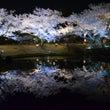 しあわせの村で夜桜見…