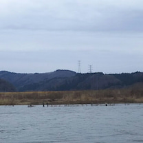 米代川サクラマス解禁の記事に添付されている画像