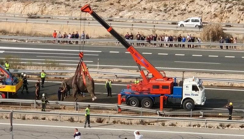 「ゾウ輸送中のトラックが横転、1頭死ぬ スペイン中部」の画像検索結果