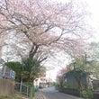 桜散るの早いですね~…