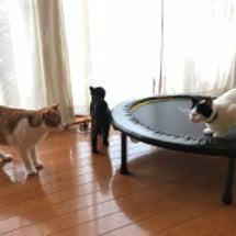 今朝のネコたち