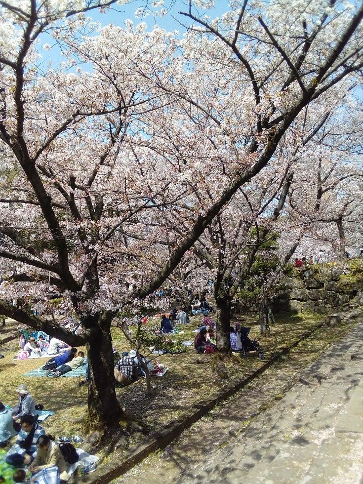 和歌山城の桜(お花見に行きました)
