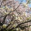 春満喫✿の画像