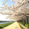 春のロシニヨーガ (o^人^o) 2018の画像