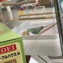 【PET PLEX日…
