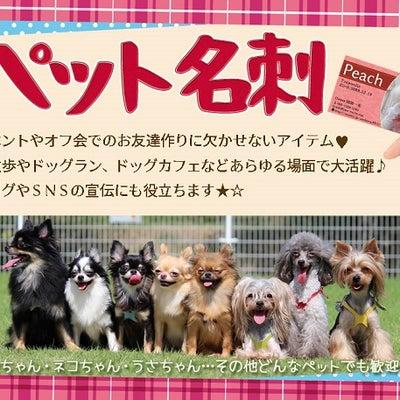 【好評発売中】可愛いペット名刺でご挨拶~~(^_-)-☆の記事に添付されている画像