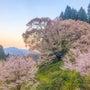 佛隆寺 1000年桜…