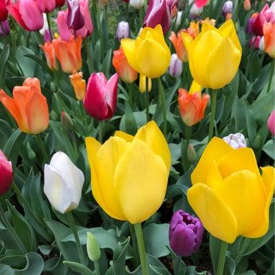 どの花みても きれいだなの記事に添付されている画像