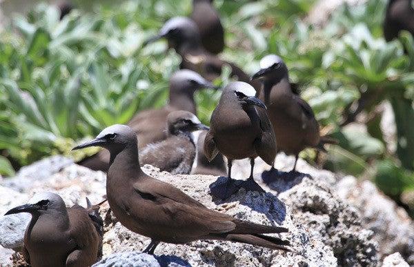 思い出の鳥 その3 ヒメクロアジ...