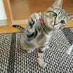 保護猫石子と寺夫、正式譲渡になりました\(^-^)/