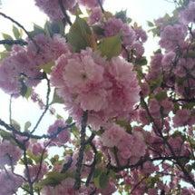 4月22日 風水アロ…