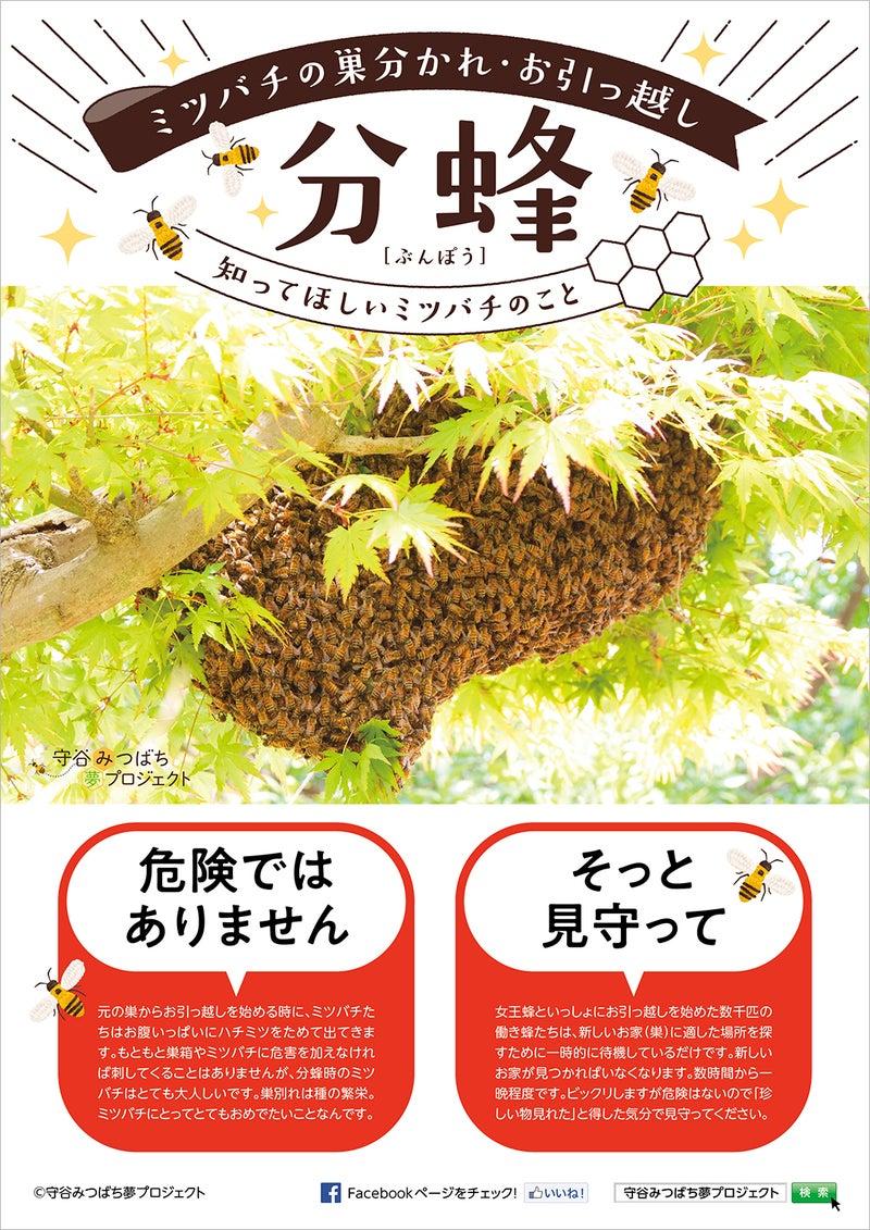 ミツバチの分蜂・危険ではありません・見守って