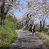 島根へ 大人の女子旅・・・桜満開!!の画像
