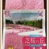 羊山公園の芝桜/秩父店の画像