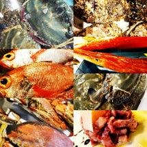 お魚とお肉だい……渡…
