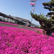 武庫川自動車学校、芝桜一般開放の記事に添付されている画像