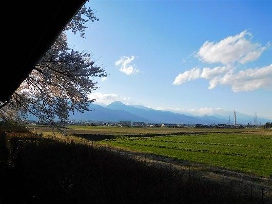 風の桜んぽ26