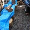 薪割りご招待の画像