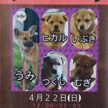 犬の譲渡会開催!!〜…