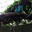 行き先は【新潟県立植物園】