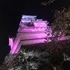 福島花見の会 in 会津若松。今年も桜が綺麗でした。の画像