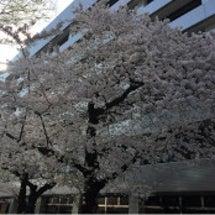 所沢オフィス通信4月…
