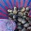 秋の潮干狩り♬で貝三昧な自給自足のお食事♬