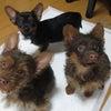 子犬3兄弟を引き出しましたの画像