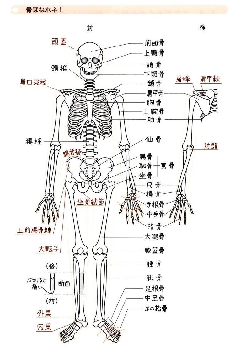 部位 体 の