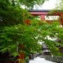卯月の京都、駆け足ひ…