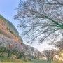 桜 屏風岩 奈良県
