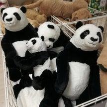パンダ好きは遺伝する…
