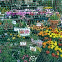 お花を愛でる余裕と、…