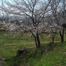 桜が開花しました(*…