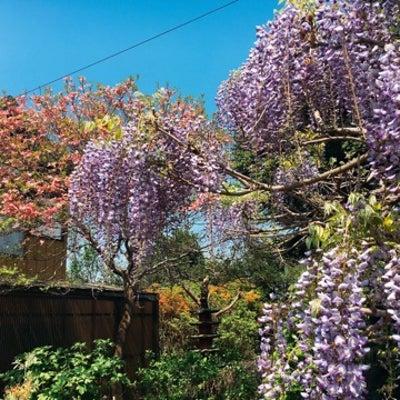 中野  美しすぎるナポリタンと絶品プリン  アザミの記事に添付されている画像