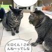 【火曜劇場】どすこい2ニャンごっつんこ‼️〜たんぽぽ4コマ〜No.28