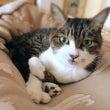保護猫医療費のための…