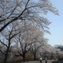 桜 part2(*´…