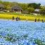 ⑤ネモフィラ☆ひたち海浜公園
