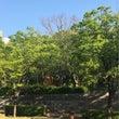 新緑の眩しい季節