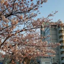 ☆★☆桜とルーラル☆…