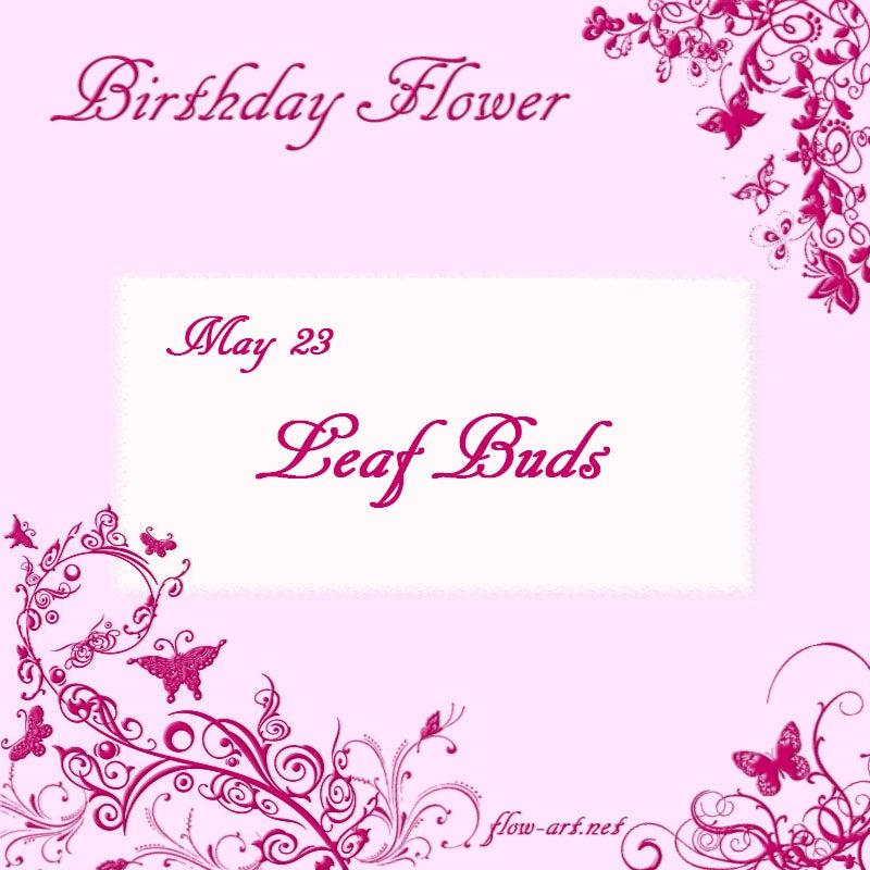 365日誕生花&花言葉-5月23日 | ...
