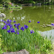慶沢園から川底池は真…