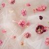 枯れた後のお花の楽しみ方の画像