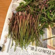 山菜の季節になりまし…