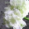 トキンバラは美しい、白バラは美しいの画像