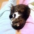猫のための家庭の医学…