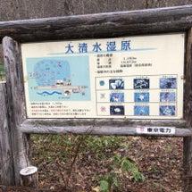 ~大清水湿原の水芭蕉…