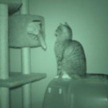 暗闇の猫を赤外線で撮…